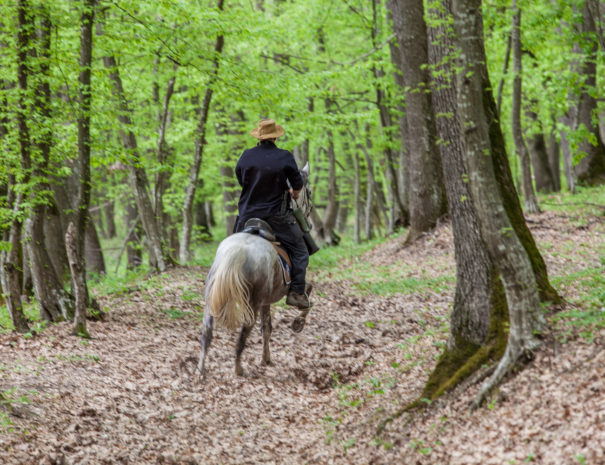 Transylvania On Horseback